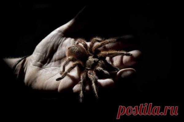 Чилийская паучья ферма http://sci.forblabla.com/blog/45998395931
