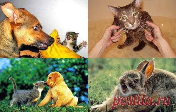 Смешные стоп-кадры с животными — Сияние Жизни
