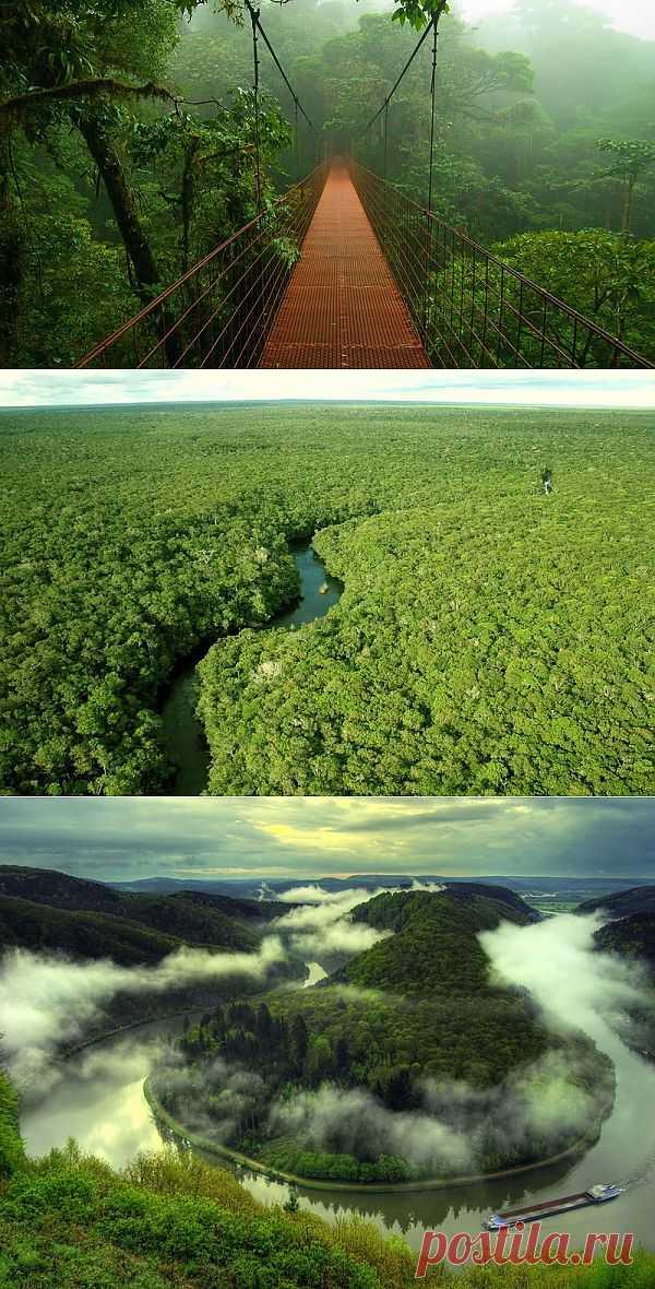 Большое фотопутешествие по лесам Амазонки