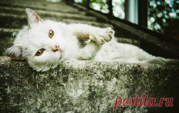 Фотография *** из раздела животные - фото.сайт - Photosight.ru