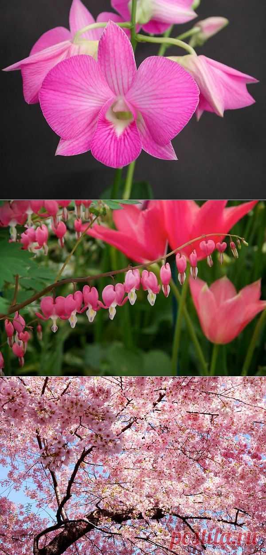 (+1) тема - Красивые цветы со всего мира | САД НА ПОДОКОННИКЕ