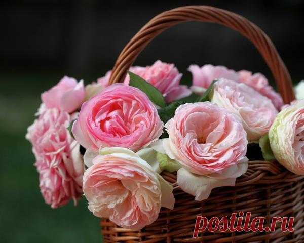 Цветы на столе - праздник для души.