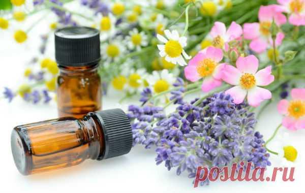 ༺🌸༻Эфирное масло равенсары: 14 полезных свойств, рецепты применения и противопоказания - Польза и вред