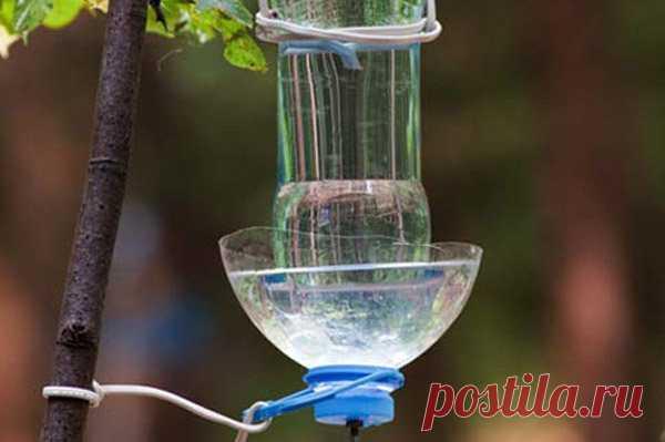Кормушки и поилки для попугаев: виды, фото, сделать своими руками