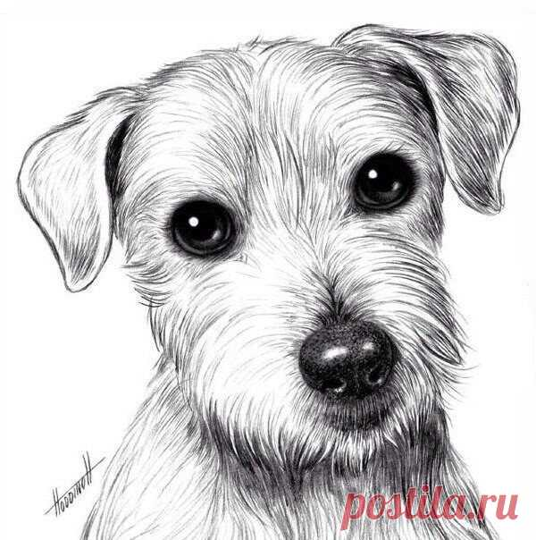 Рисуем собачку