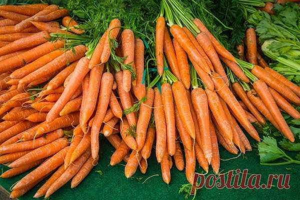 Старинный, дедовский способ при помощи которго морковь вырастает вкусной и сочной | У-Дачный канал советы от Арины | Яндекс Дзен