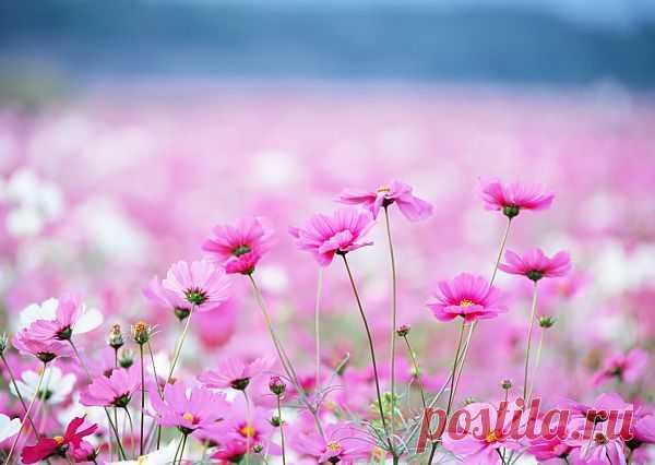 А вы любите полевые цветы?