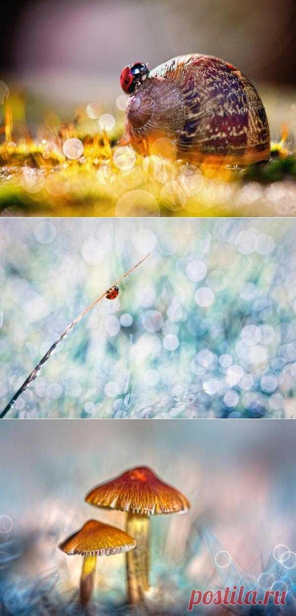 Сказочные фотографии живой природы
