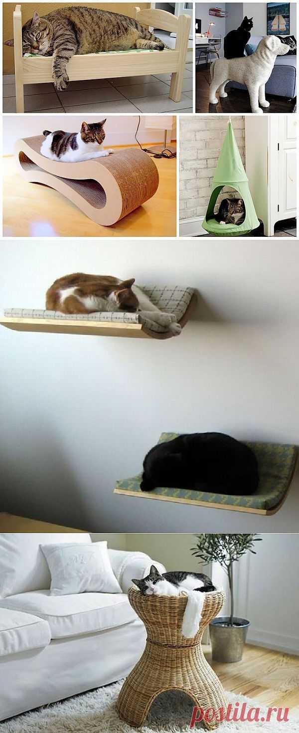 Если в вашем доме есть кот...