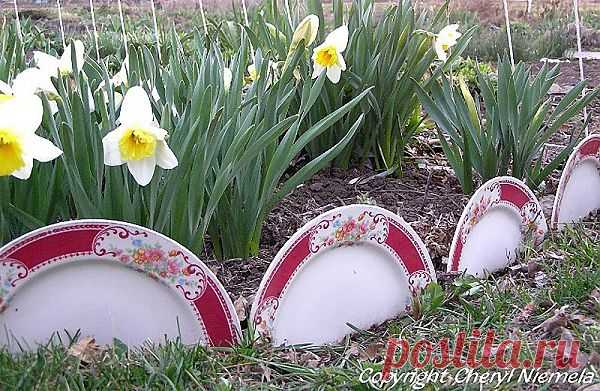 Разбитым тарелкам найдется применение в саду.