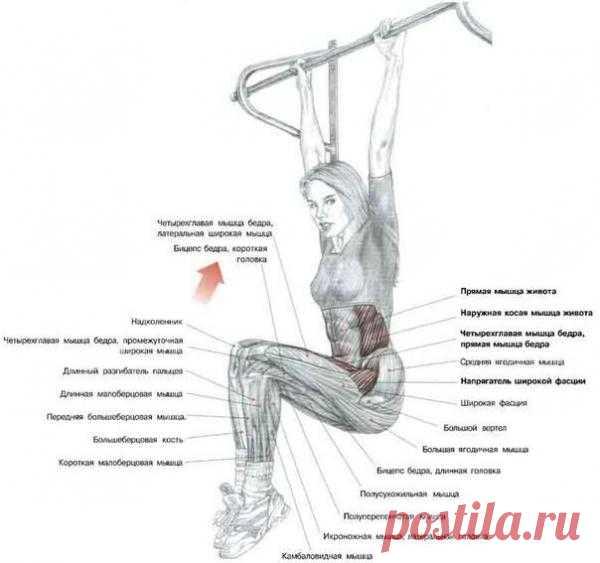 Качаем пресс. Подъём коленей в висе  Это упражнение задействует:  1. Подвздошно-поясничные, прямые мышцы бедер, напрягатели широких фасций при подъеме ног;  2. Прямые мышцы живота и в меньшей мере косые мышцы, когда вы подтягиваете колени к груди.