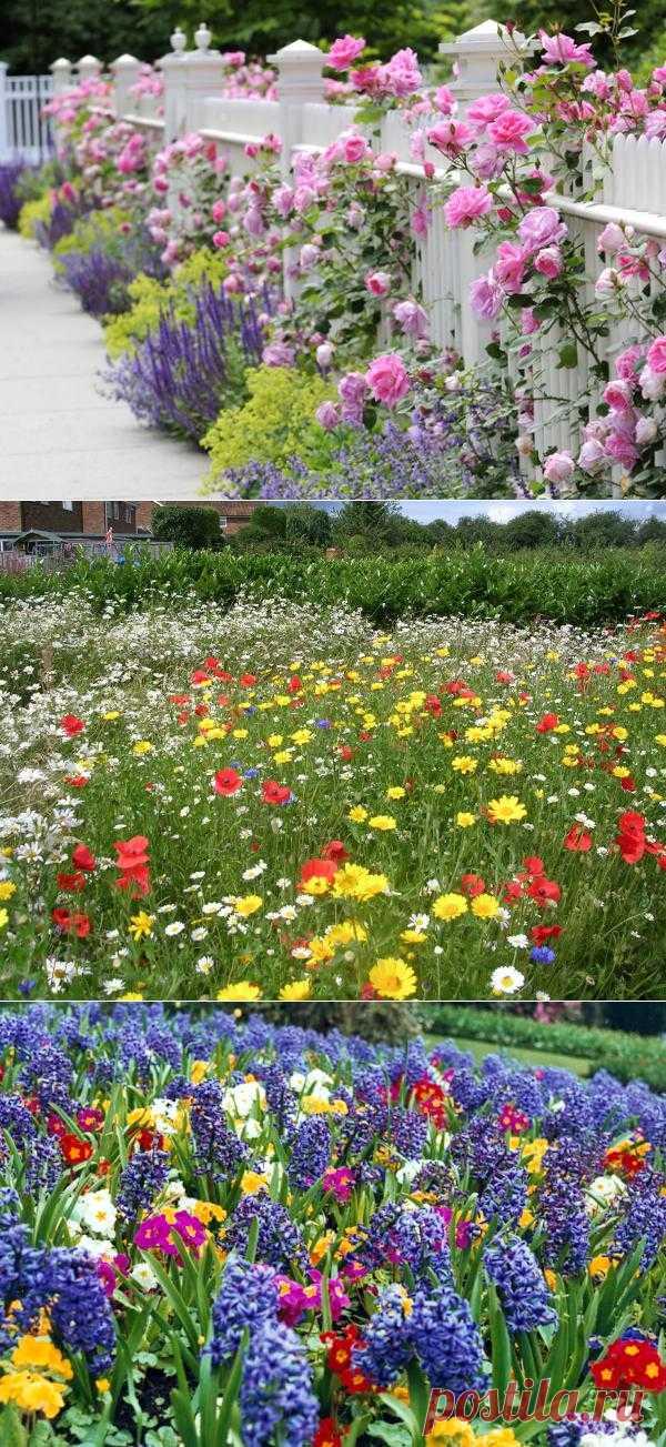 Цветы как украшение в вашем саду