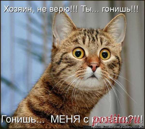 Котик в шоке