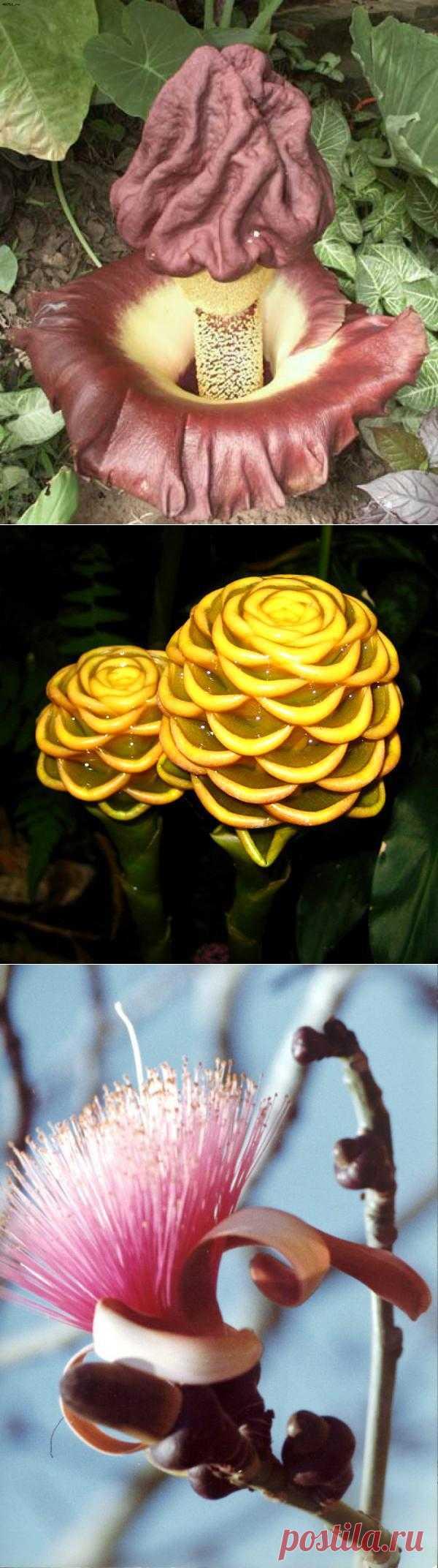 Самые необычные цветы » Мир в картинках