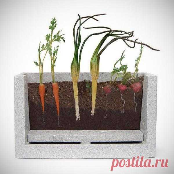 Для особо любознательных ящик для рассады  с окошечком. Можно наблюдать за ростом любимых растений. $30 USD