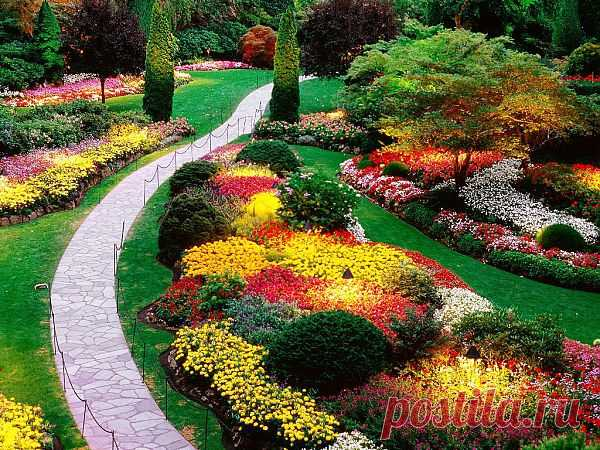Цветы для сада и клумб