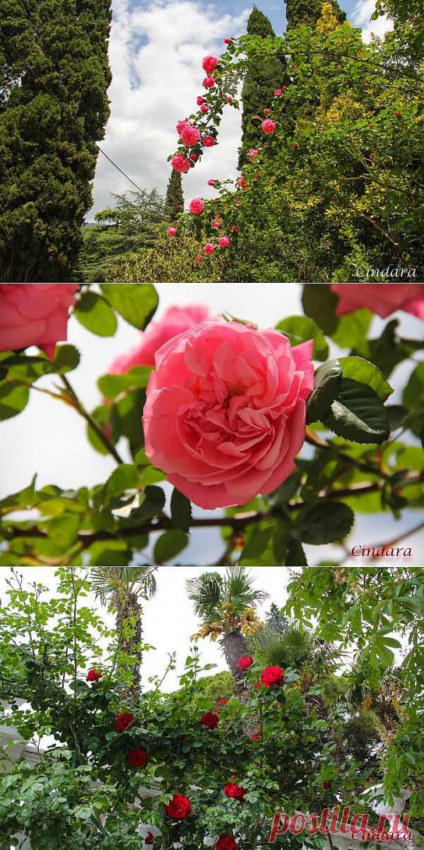 (+1) - Феерия ириса, Никитский ботанический сад в Ялте | САД НА ПОДОКОННИКЕ