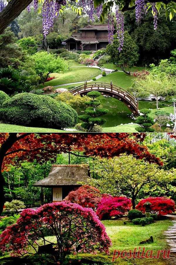 ЯпонскоЛандшафтное|Сад.