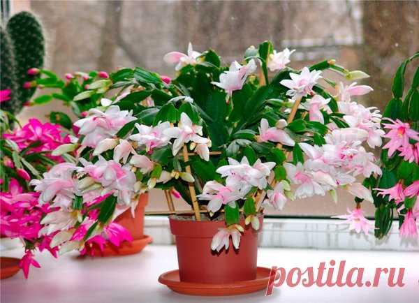 Чудо удобрение для всех цветов:для комнатных и садовых | Любимый огород | Яндекс Дзен