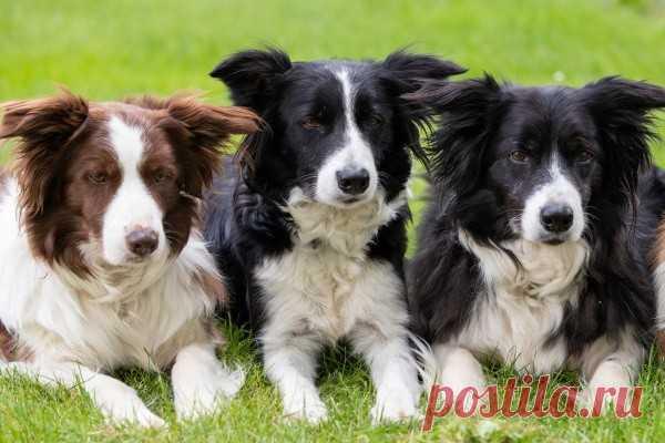 Ученые определили самую умную породу собак В Великобритании решили проверить, какие породы собак самые умные. О результатах исследования пишет таблоид The Daily Mail.В эксперименте приняли участие 40 псов разных пород. Специалисты выяснили, что животные хорошо запоминают команды, где есть глаголы. С существительными дела обстояли...