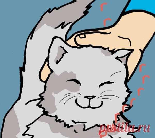 Ученые рассказали, как кошки влияют на здоровье человека . Милая Я
