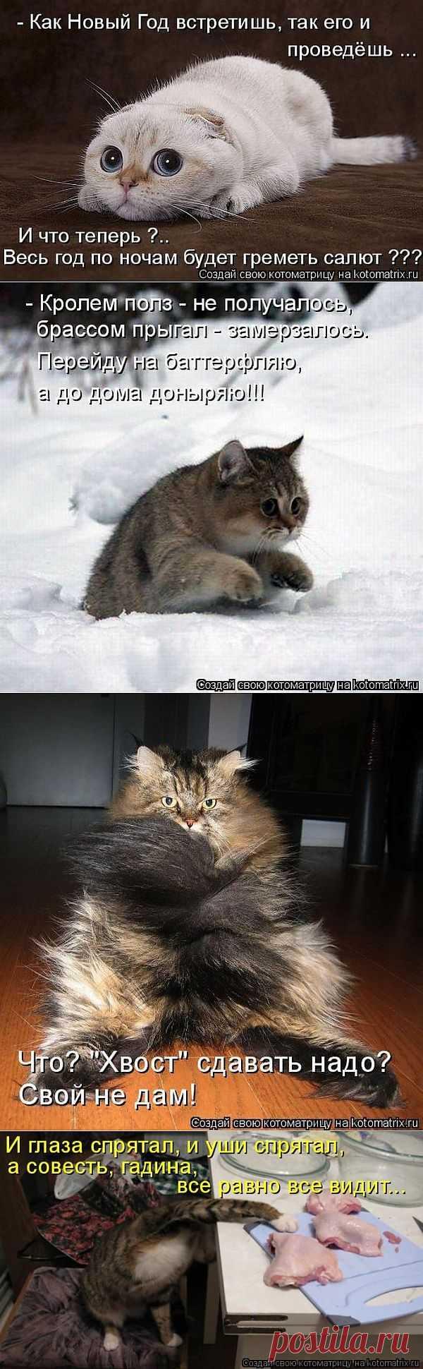 ...Смешык...: Смешные фото животных с надписями