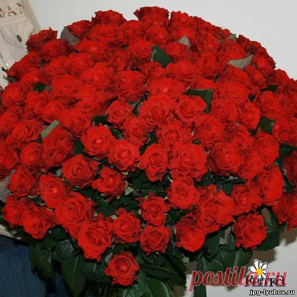 фото открытка с розами