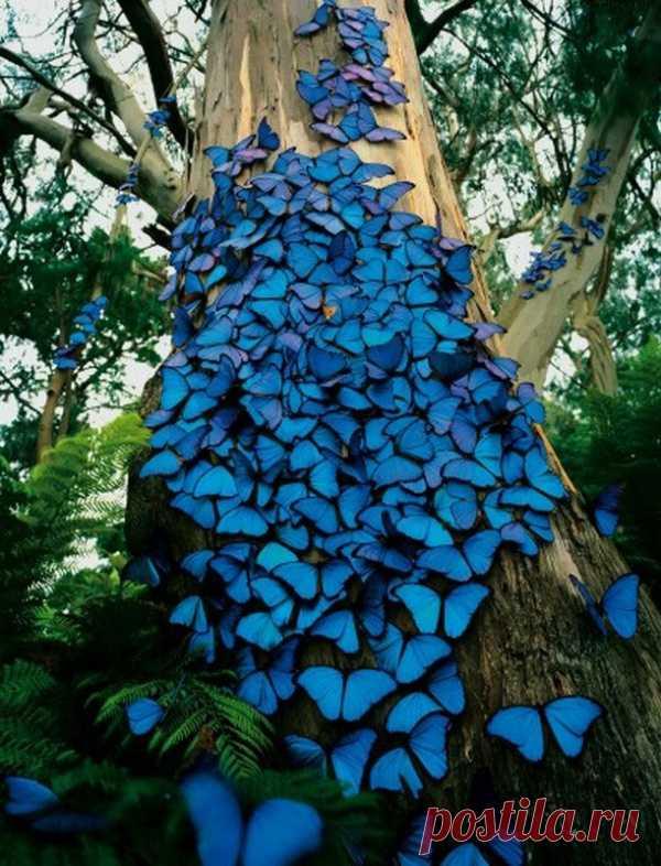 Впечатляющее зрелище! Просто море красивых синих бабочек