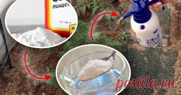 10 способов применения пищевой соды на даче Использование соды в саду и огороде весьма разнообразно. Это вещество неопасно для растений, не причиняет вреда полезным насекомым и даже при передозировке не ухудшает качество урожая. Берите на заметку наши рецепты!