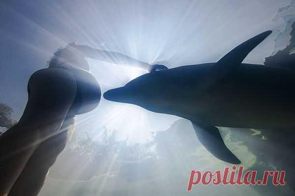 Просто потрясающая фотография: дельфин и будущая мама
