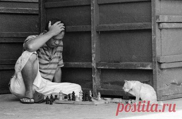 Шах и мат!