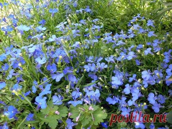 8 цветочных культур, которые сеют на рассаду в феврале - Огород, сад, балкон - медиаплатформа МирТесен
