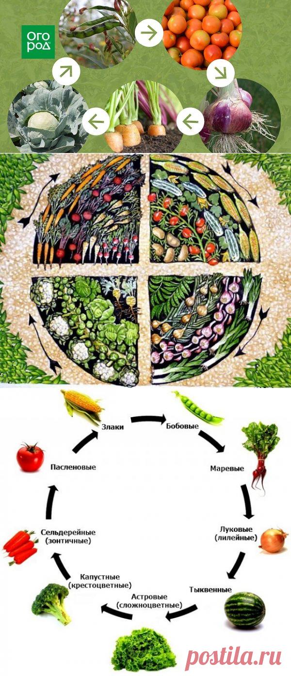Севооборот, или Что после чего сажать в огороде | Почва и плодородие