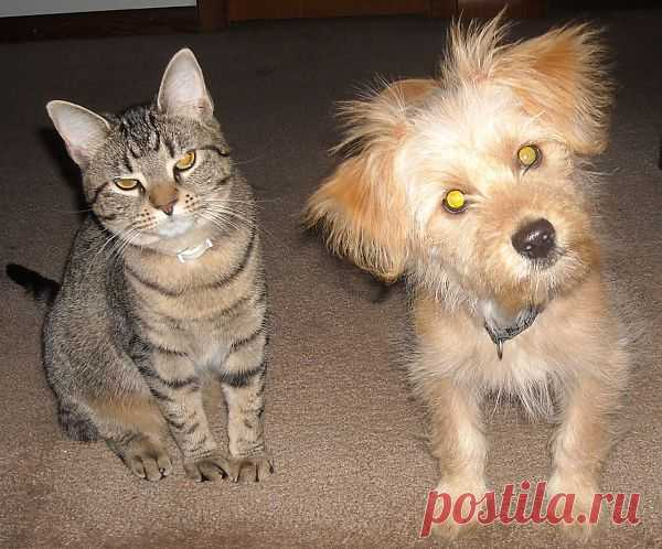 Cat And Dog  Free Stock Photo HD - Public Domain Pictures