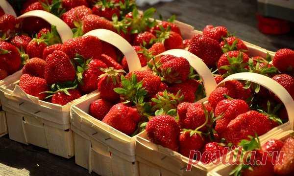 Проверенный способ: получить высокий урожай клубники | У-Дачный канал советы от Арины | Яндекс Дзен