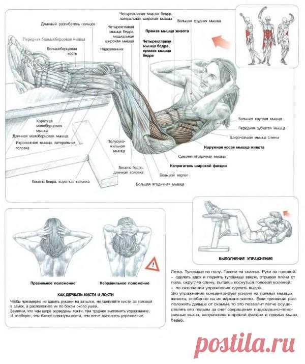 ПРЕСС. Сворачивание туловища с голенью на скамье. Данное упражнение рекомендуется использовать с целью проработки прямых мышц живота, в первую очередь это касается верхней части мышц живота