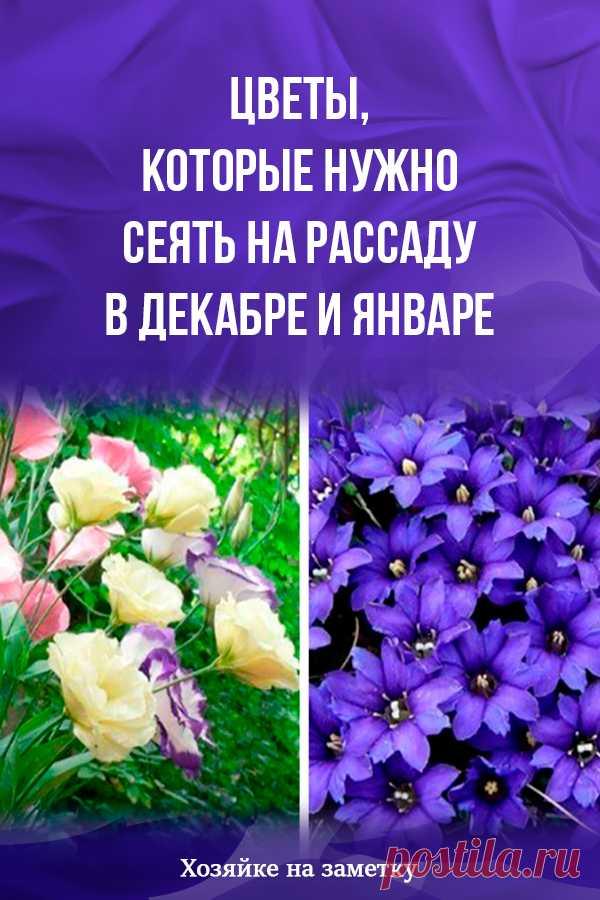 Цветы, которые нужно сеять на рассаду в декабре и январе