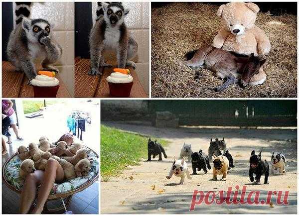 http://udivitelnoe.mirtesen.ru/blog/43808084151