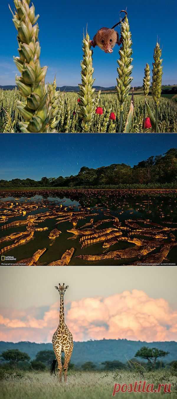 Лучшие фотографии National Geographic за июль 2013   Уши, лапы, хвост