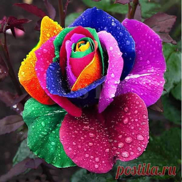 Favorable 100Pcs Rainbow Rose Magic Garden Seed Colorful Rose Flower Home Garden Bonsai Potted Ornamental Plants - NewChic