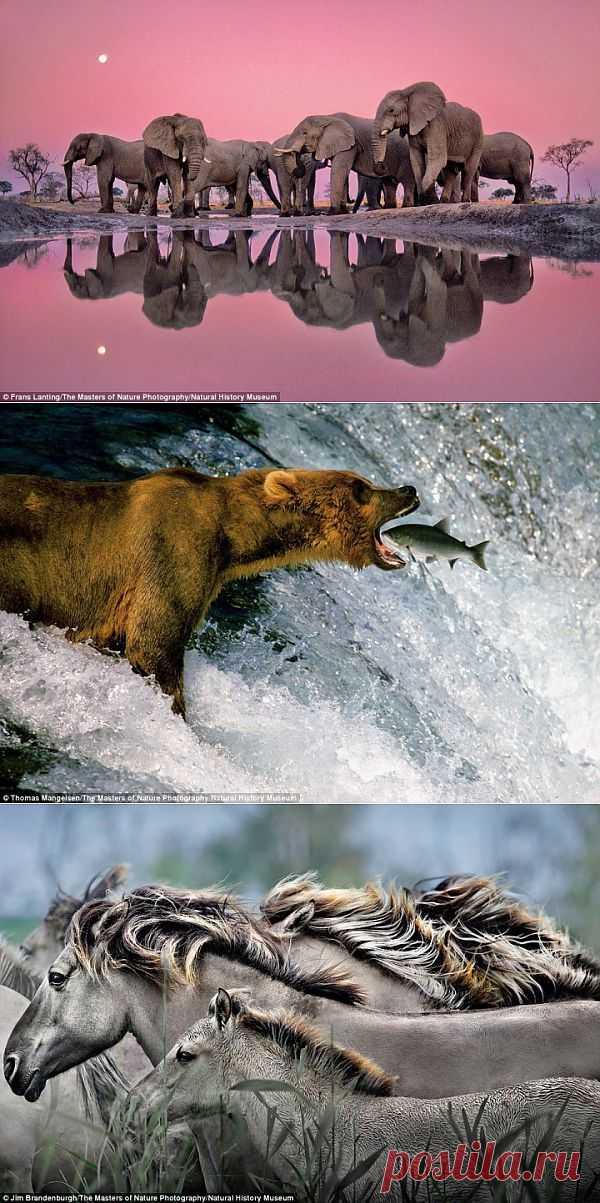 (+1) - Прекрасные фотографии диких животных | НАУКА И ЖИЗНЬ