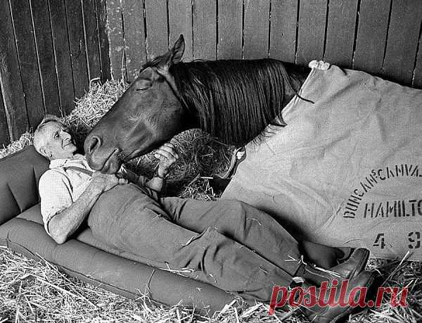 """Тренер скаковых лошадей Томми Вудкок с его чемпион """"Неосторожная"""" в ночь перед Кубком Мельбурна 1977 года, Флемингтона"""