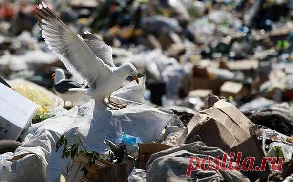 Мне пришел платеж за вывоз мусора (ТКО) на земельный участок БЕЗ ДОМА! | Я⚠️истеричка | Яндекс Дзен