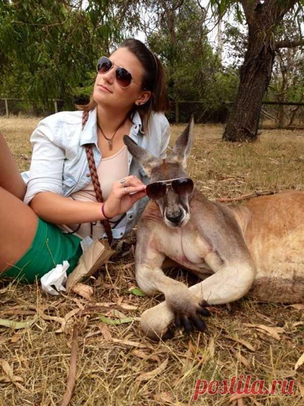 Фотографируйтесь с кенгуру правильно! :)