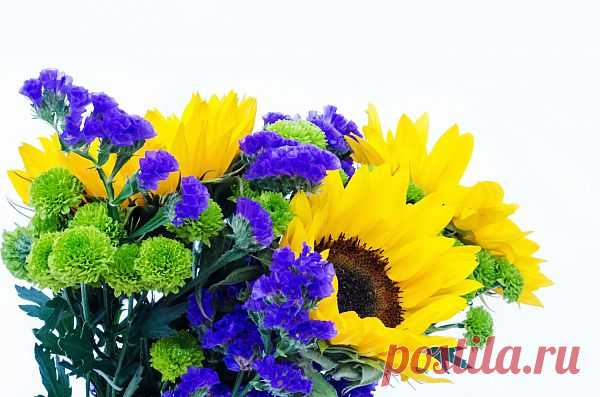 Flowers  Free Stock Photo HD - Public Domain Pictures