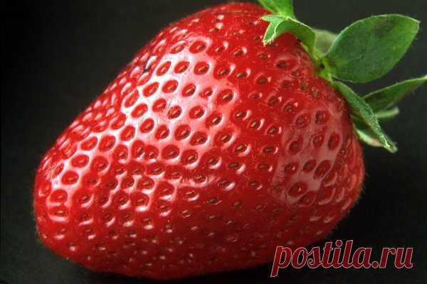 Апрель для садовода: а вы уже подкормили свою клубнику? Читайте как именно это лучше сделать! | Цветы и плодоносящие культуры | Яндекс Дзен