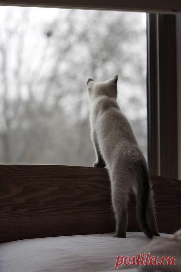 картинки кошка ждет этой статье
