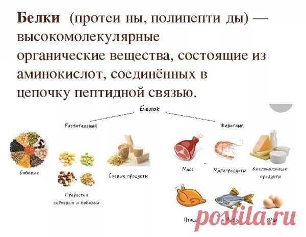 В каких продуктах содержится белок: таблица и список