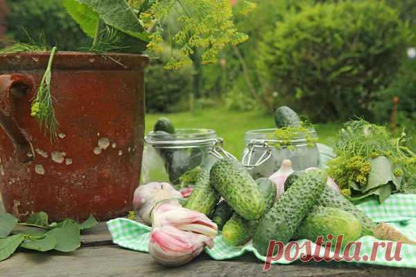 Малосольные огурцы быстрого приготовления - 7 рецептов