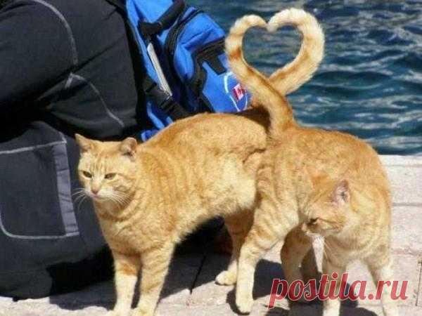 Рыжая любовь )